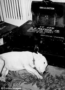 Patton's Dog Willie Grieving After His Death (2)