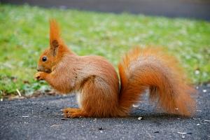 Squirrel01 (2)